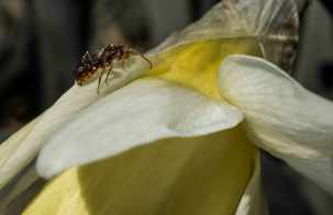 sunnybug