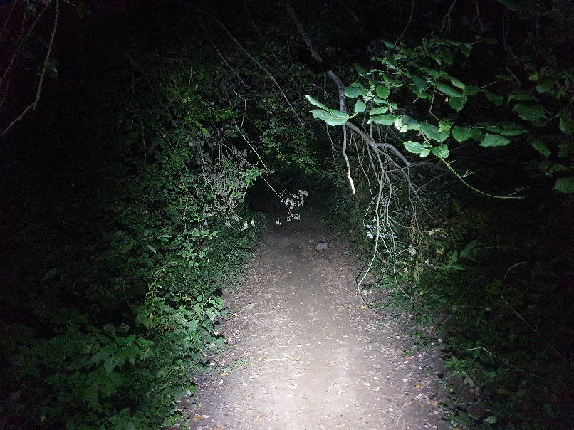 My constant companion header image shows a torch lit footpath through the woods.