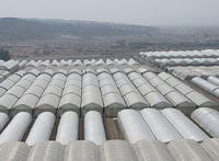 теплицы в израиле