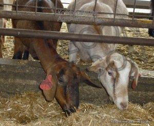 Agro-Milk 2012 Практическая конференция по молочному животноводству