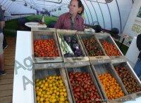 Выставка Арава - помидоры