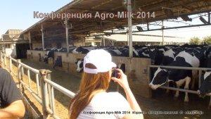 коровник молочное животноводство