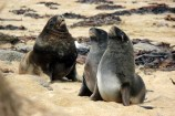 photo of Sea Lions on the beach