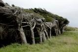 photo of windswept trees