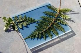 photo of fern on top of blue cyanotype paper