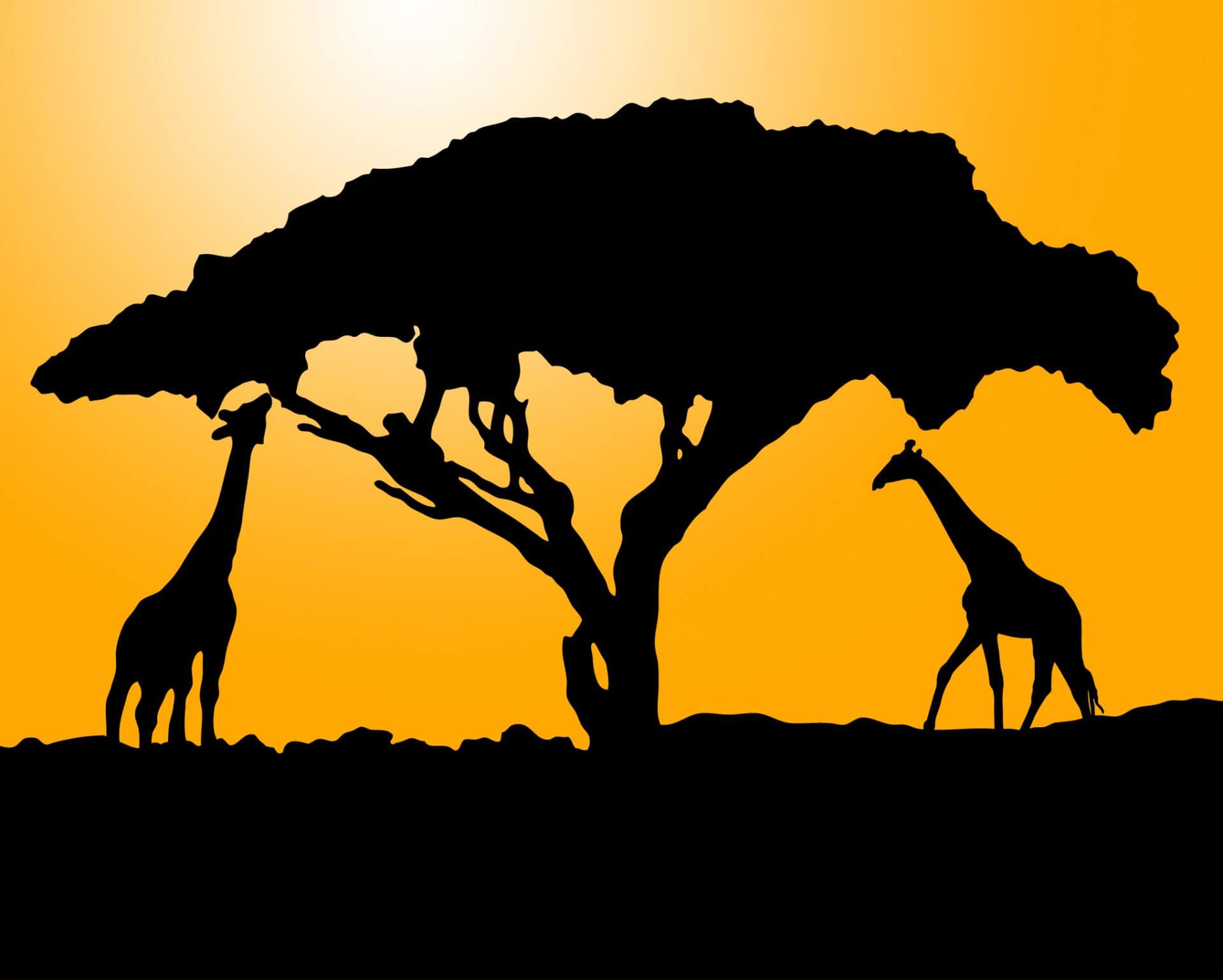 Что такое Африка в понимании Google? 10