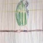 Parrot-Drawing-by Aleksandra Smiljkovic Vasovic aleksandraartworkcom