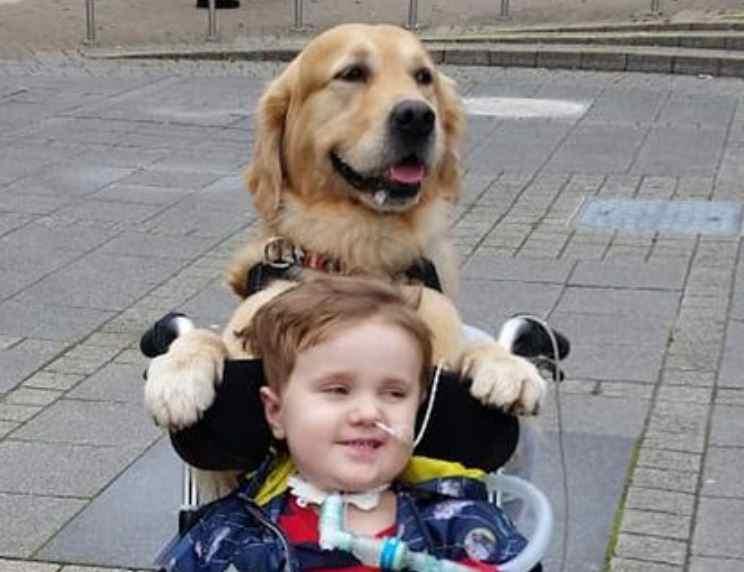 Пес вернул жизнь ребенку