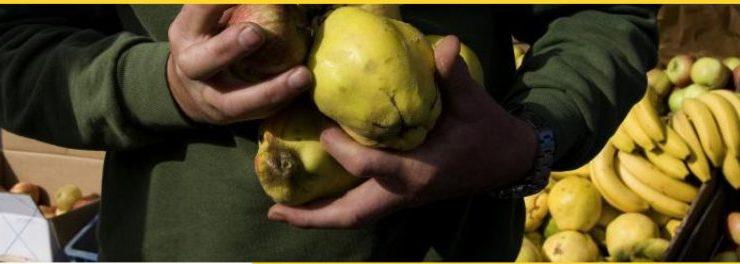 Começa hoje o 1º ciclo de encontros regionais com Agricultores Biológicos