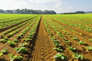 """Agricultura Emparcelamento """"é o maior desafio para as próximas décadas"""", diz ministro"""