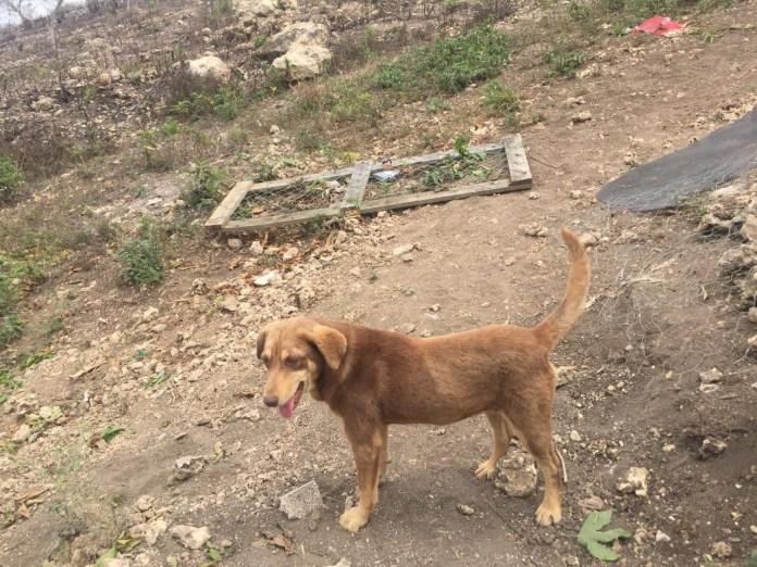 Mascotas, los más vulnerados en los desalojos del Mocri; activistas les buscan hogar 19f9b1e1 25af 4e21 b37d 0defbcf0eae5