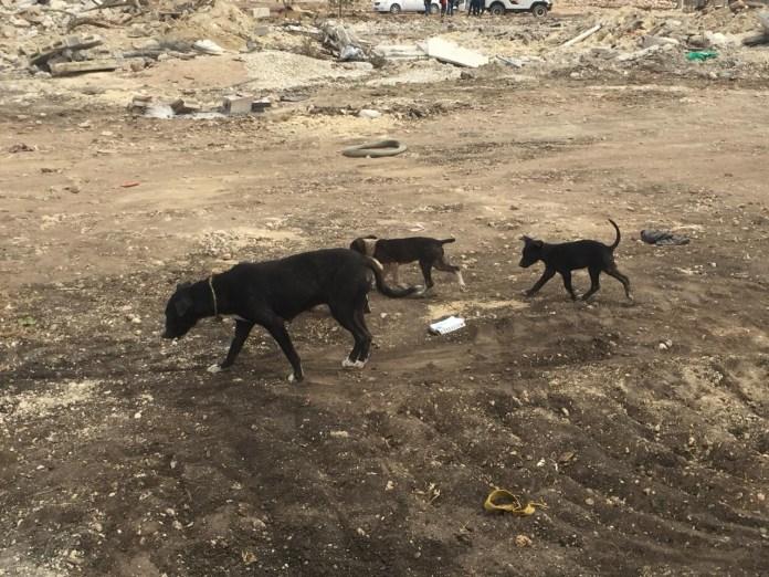 Mascotas, los más vulnerados en los desalojos del Mocri; activistas les buscan hogar d79d3c37 4d76 4af5 be26 416aefaf1a45
