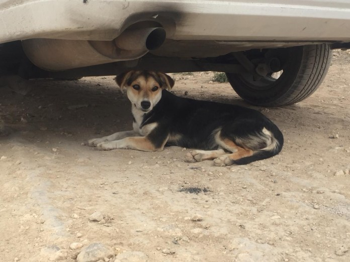 Mascotas, los más vulnerados en los desalojos del Mocri; activistas les buscan hogar e584e52e 1ae6 40f9 9da7 bbeba8bb57bd