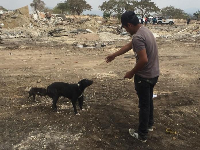 Mascotas, los más vulnerados en los desalojos del Mocri; activistas les buscan hogar f557b21a a0e5 4dab a4ae 694c99889423
