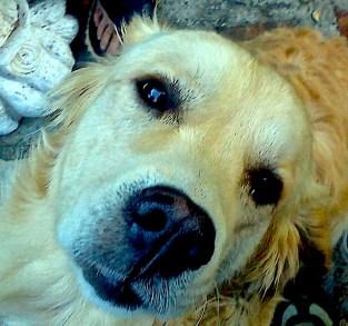 Asturias vida con perros, slow life