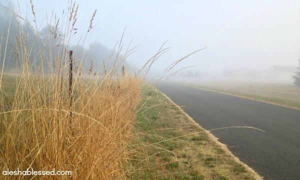 Foggy1w