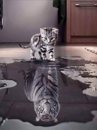 2762-gatto-rispecchia-nell-acqua-vede-tigre