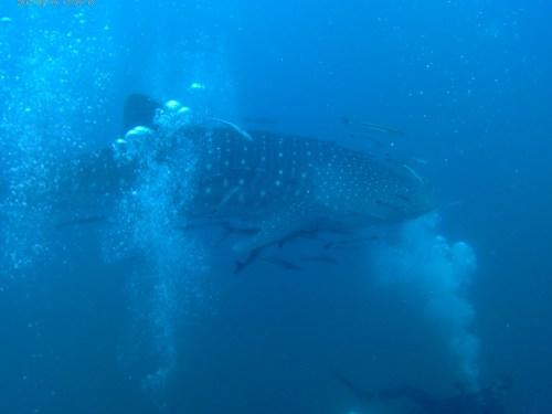 Koh Tao – Vita da Diver… continua