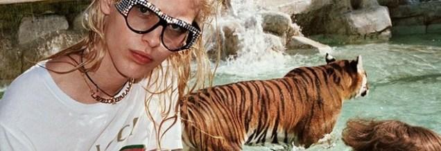 2142849_tigri