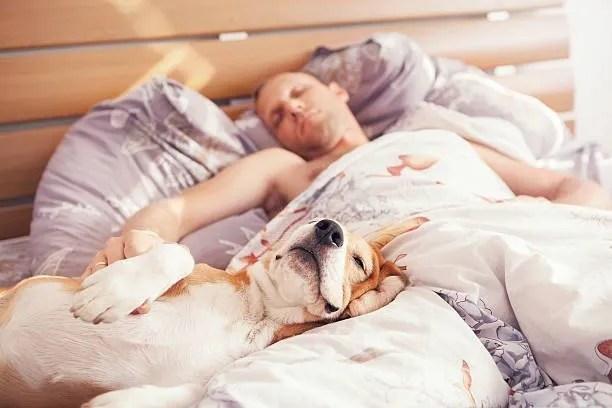 Cane e padrone a letto