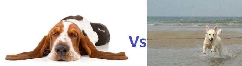 la nutrizione dei cani deve tenere in conto in una dieta equilibrata delle differenze di energia e di attività fisica tra un cane ed un altro