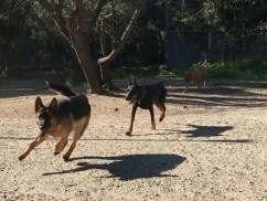 Area cani a Messina