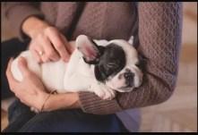 Scelta del cucciolo. La manipolazione nel Volhard test