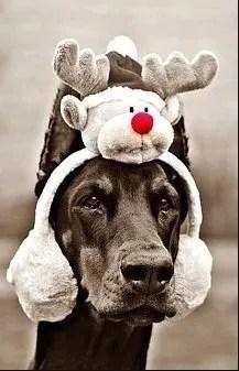 Ragalo di Natale paraorecchie per cane