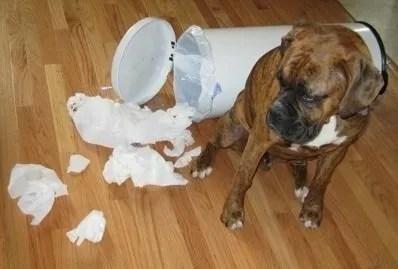 Diciamo che il cane provi colpa se torniamo e troviamo un danno in casa. Ma è così?