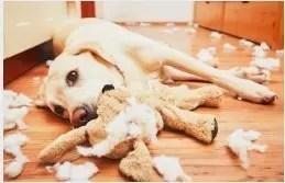 I cani provano colpa?