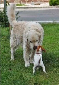 Con il linguaggio degli odori i cani si conoscono