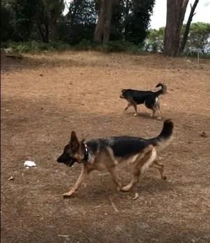 Addestramento con il premio. Alcuni cani preferiscono una pallina, altri semplicemente lasciati liberi di esplorare. Ogni cane è un universo a sè