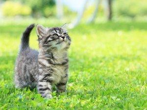 Aunque se celebre 3 veces al año, hoy 20 de febrero es considerado el Día Internacional del Gato.