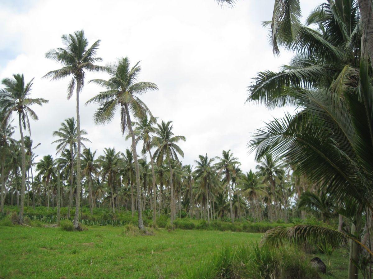 Tongatapu, el reino de las palmeras