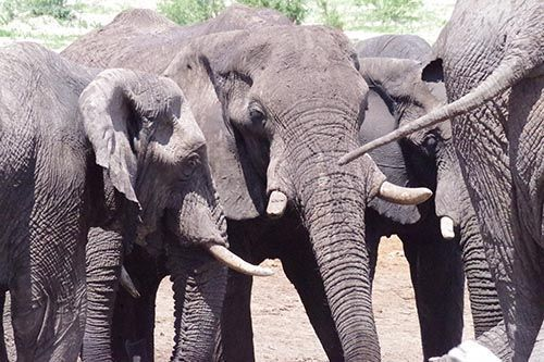 Elephant Sands, Botsuana