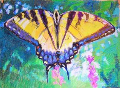 butterfly drawing late july working (3)