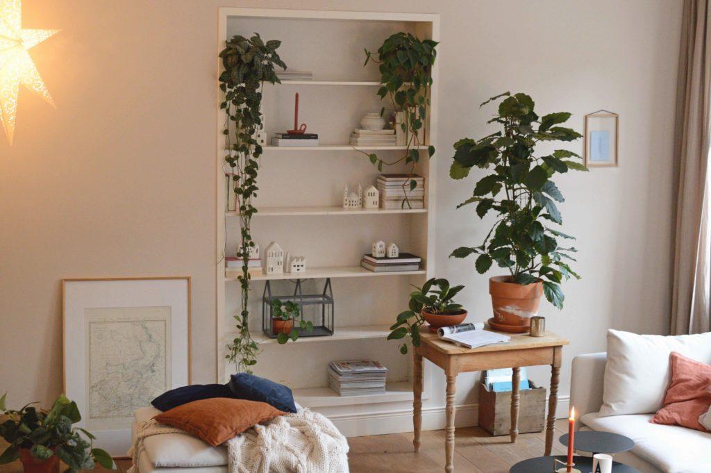 Tetrastigma voinieranum plant