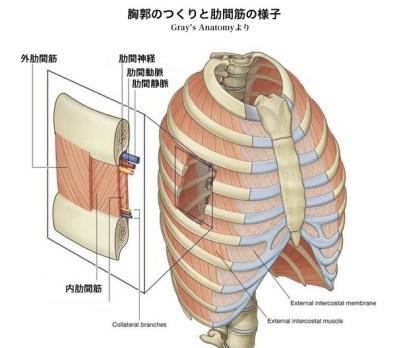 外肋間筋g