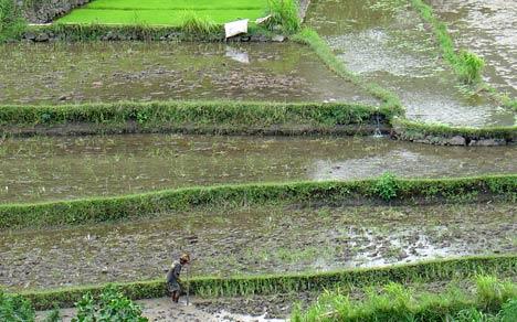 bali rice inland island