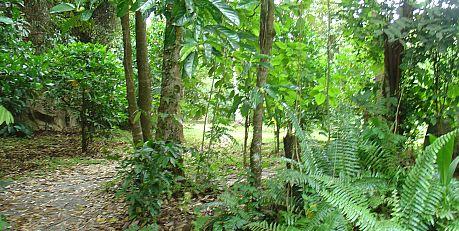 jungla tropicala