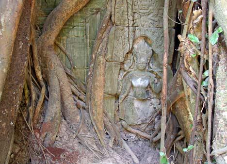 Ta Prohm ancient temple Cambodia