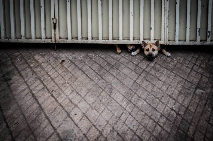 Desperate Dogs - A photo by Alex Leonard