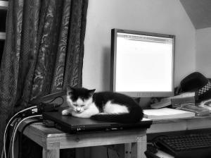 Sleeping and working