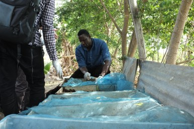 Preparing biomass beds for the production of maggots as feed for chicken, guinea fowls and tilapia, in Ghana. Picture: A. Aebi
