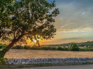 Sonnenuntergang in Apulien. Foto: Alexander Baumbach