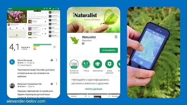 Стартап iNaturalist: приложение для распознания животных и ...