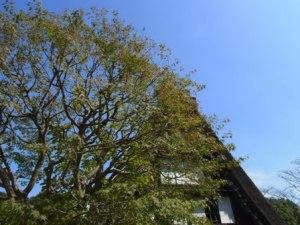 生田緑地に移築された白川郷の民家