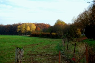 autumne wood