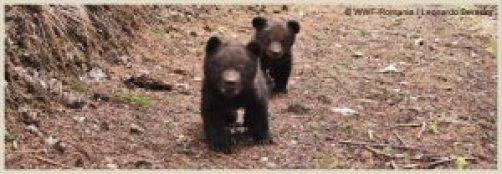 content-bear02