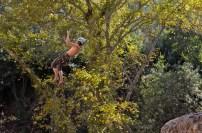 Tarzan?